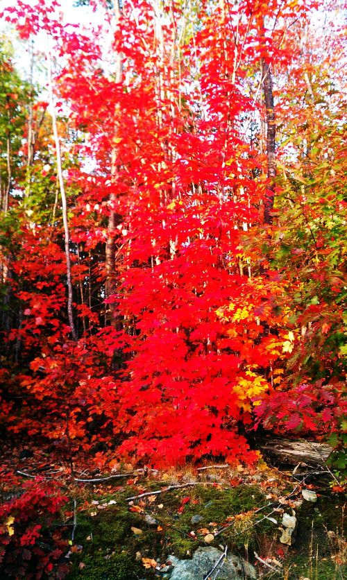 Marquette County is Blazing With Fall Color